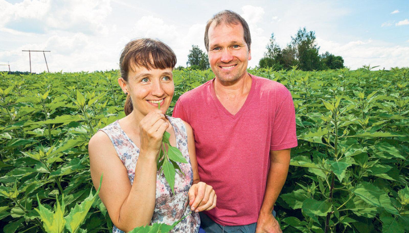 Andeia Kaseorg ja Uku Uibopuu oma       maapirnipõllul, millel kasvav on toonud neile parema tervise ning loodetavasti toob ka sissetuleku.