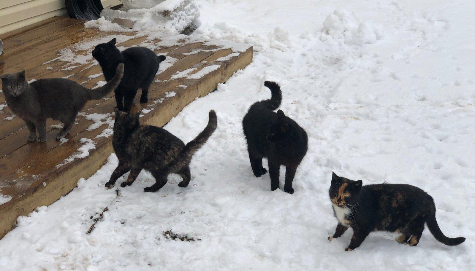Ilmamuutused kasside kevdisi tegevusi palju ei mõjuta, neil on ikka omad märtsikuised asjad ajada.