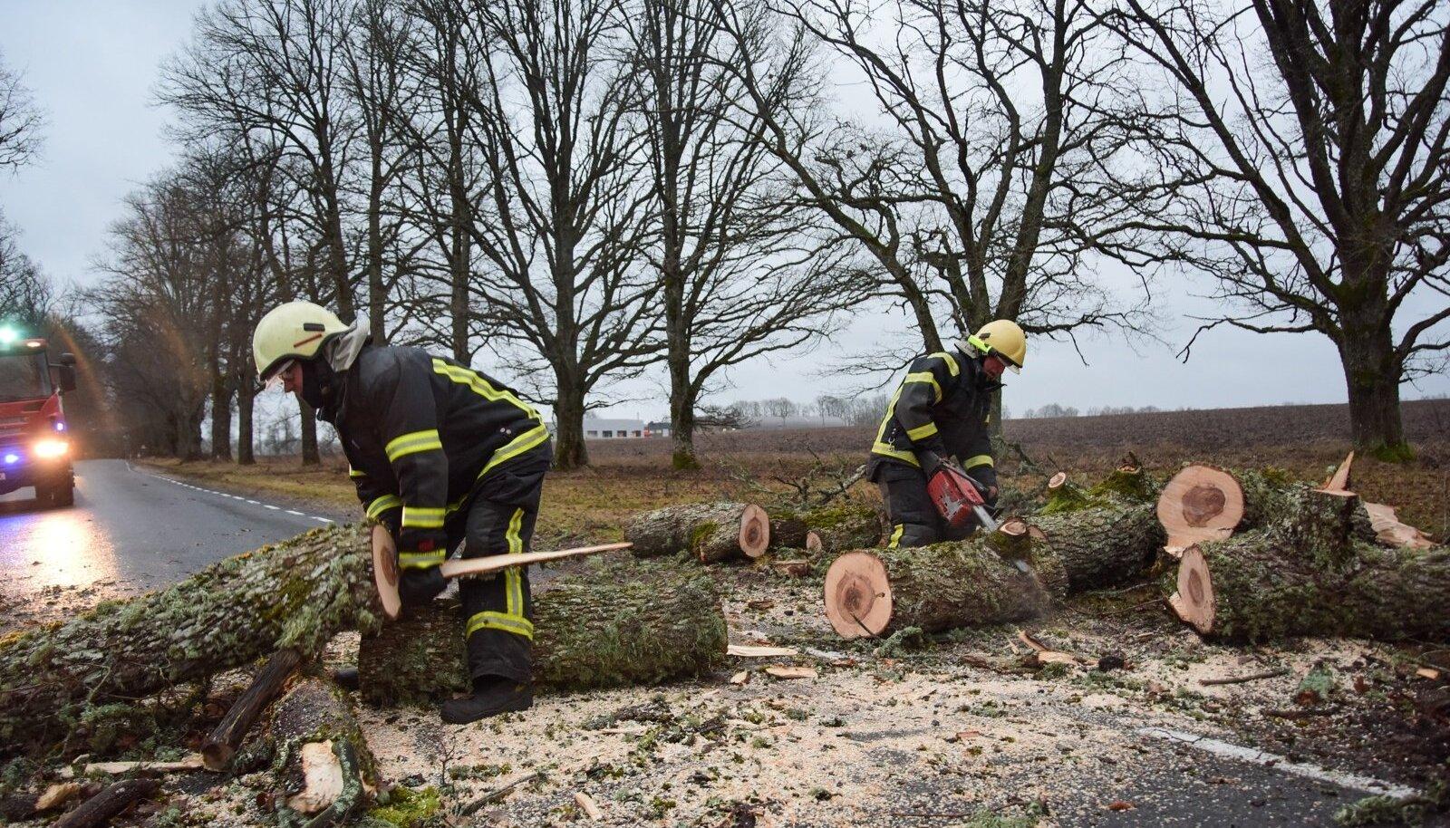Olustvere alevikus langes puu teele