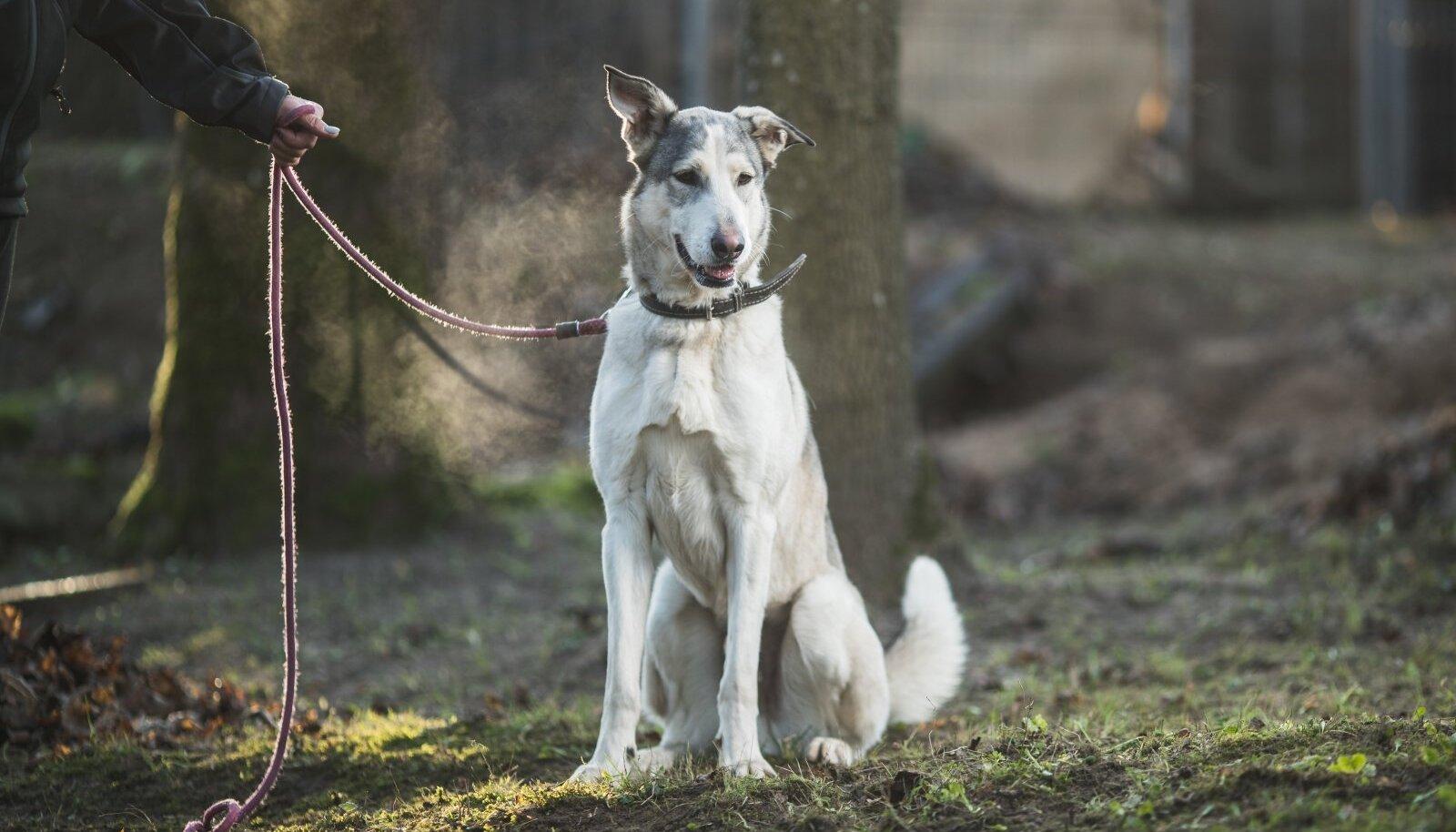 Metsas ohustavad koera erinevad putukad
