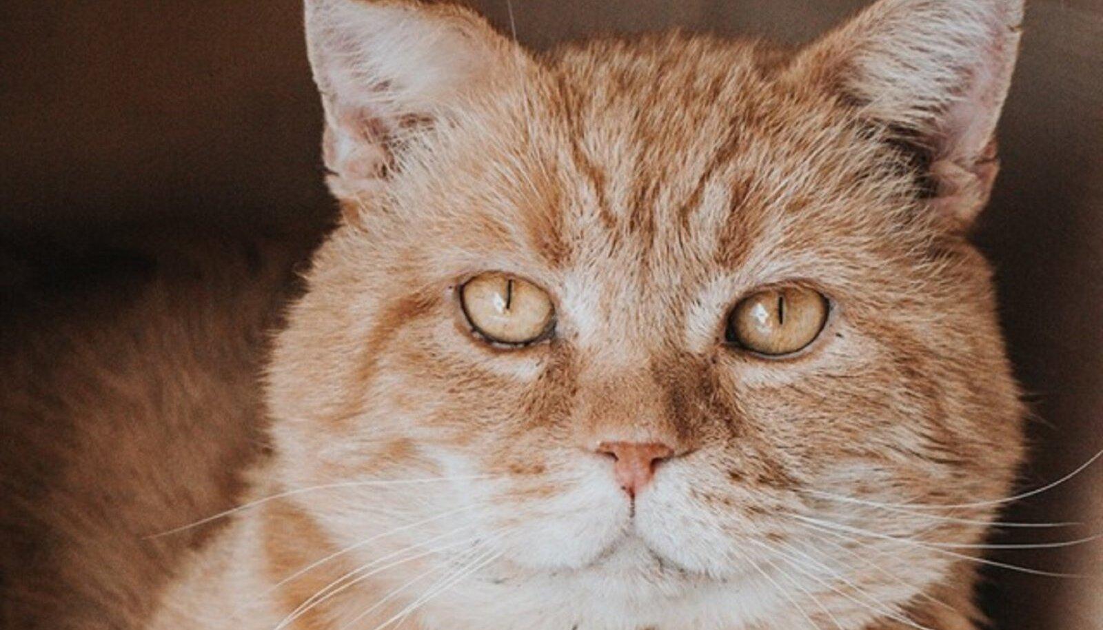 Garfield ootab kodupakkumisi!