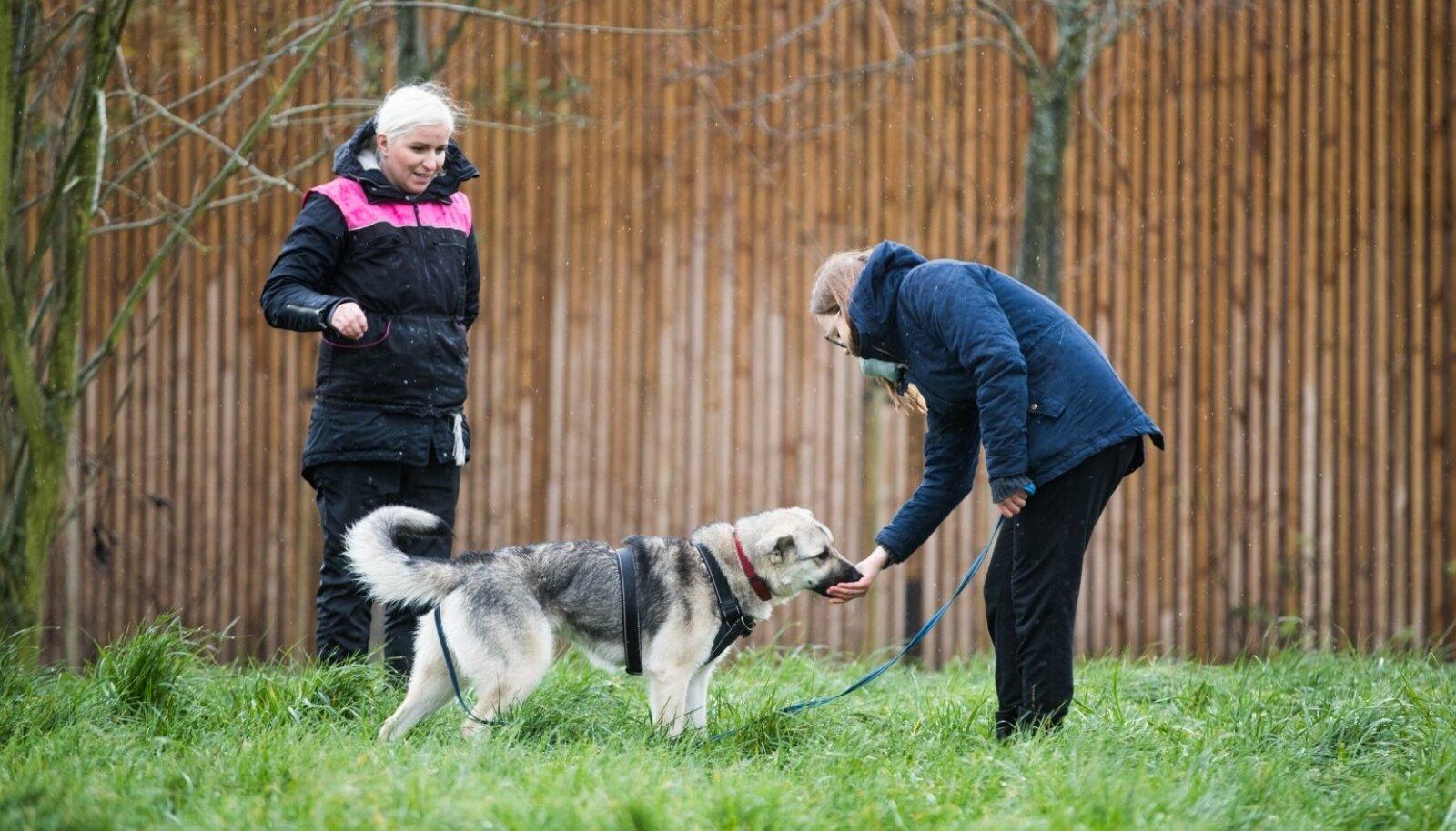 Hea treener märkab iga võimalust koera tublit käitumist premeerida. (Treener Mari Piht, Emma ja ajakirjanik Anette Parksepp)