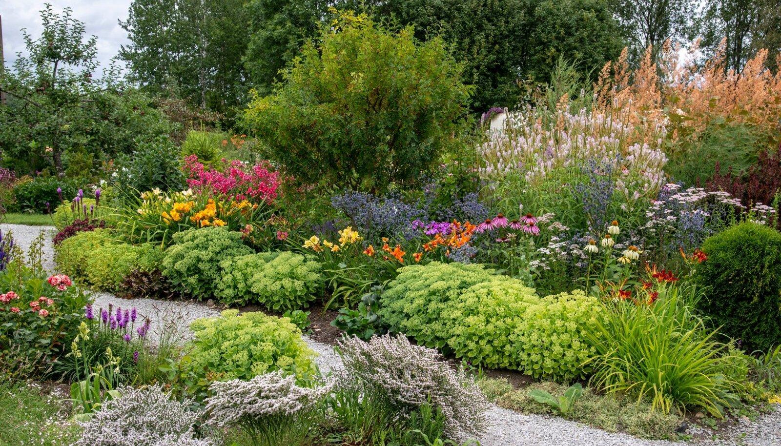 Jelene armastab tihedat istutust ja looklevaid peenraservi. Nii saab aeda kujundada palju väikseid radu ja salasoppe.