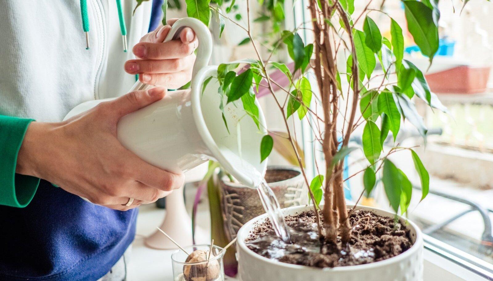 Enne reisile asumist kastke taimi ülima hoolega ning seejärel veel veidi.