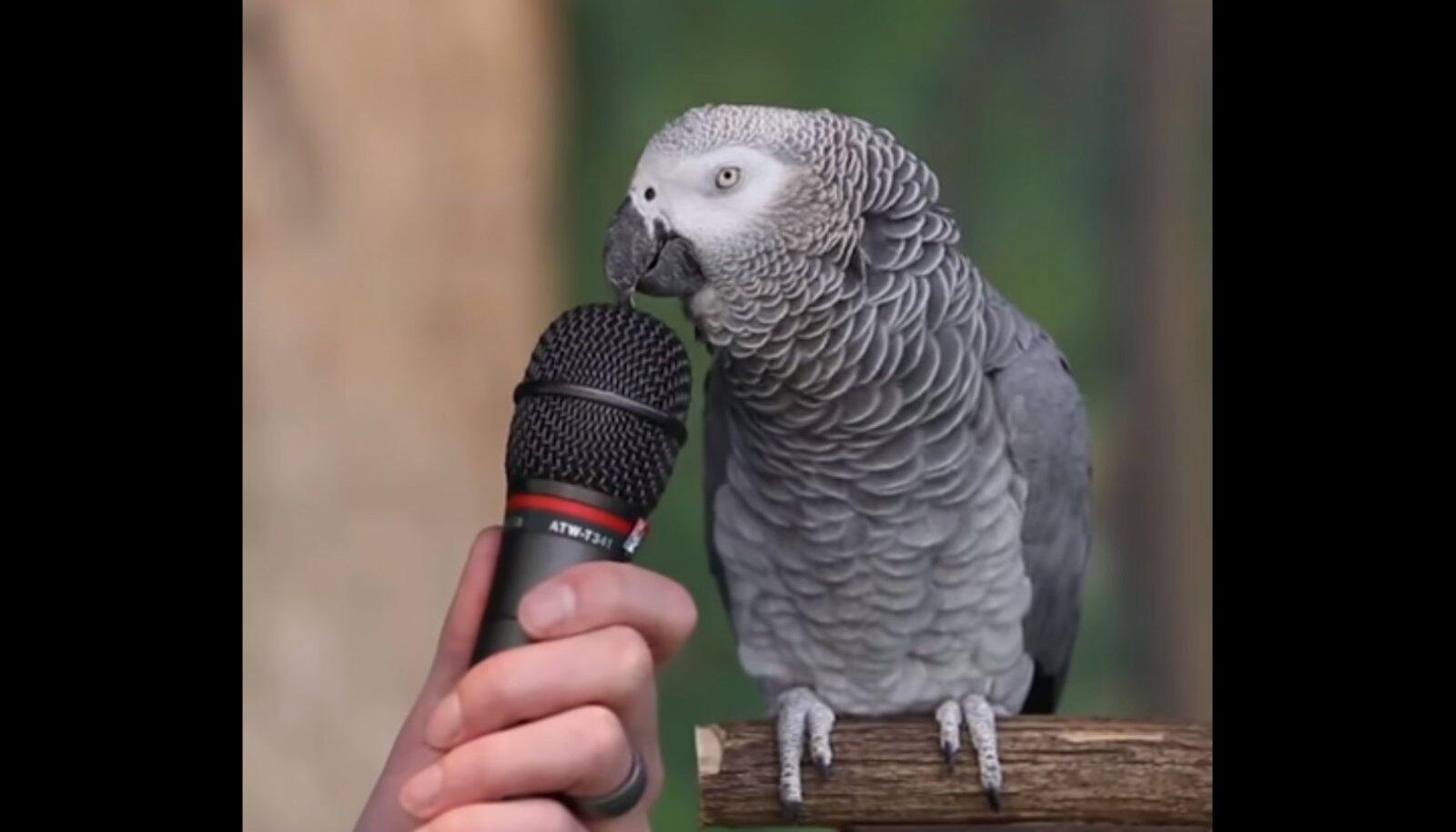 Papagoi intervjuu