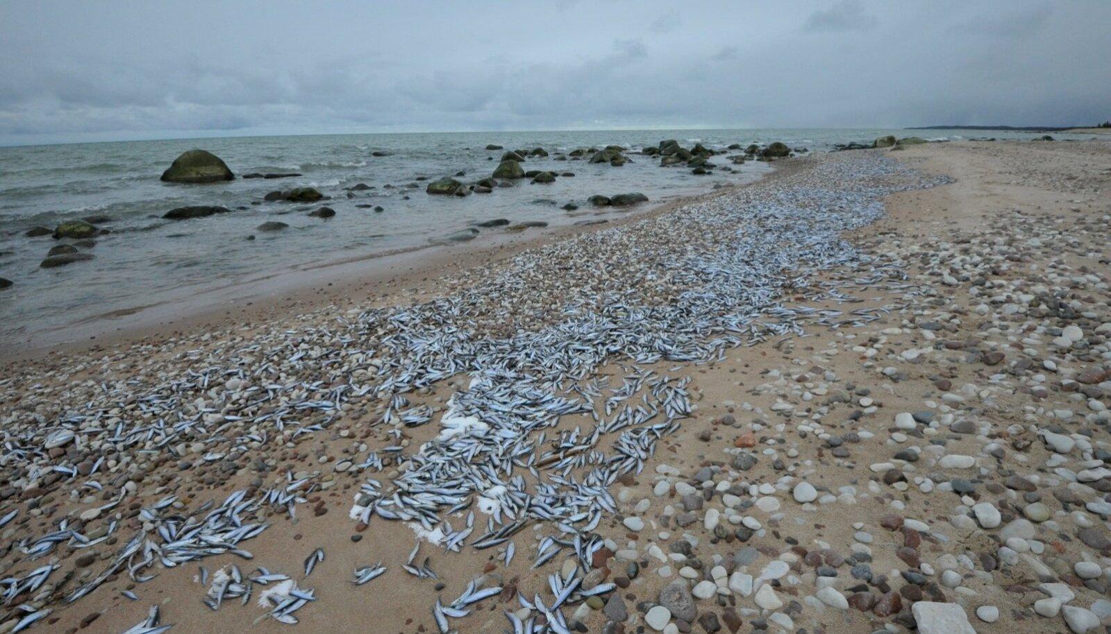 Kaldale uhutud kalad Hiiumaal Kõpu poolsaarel