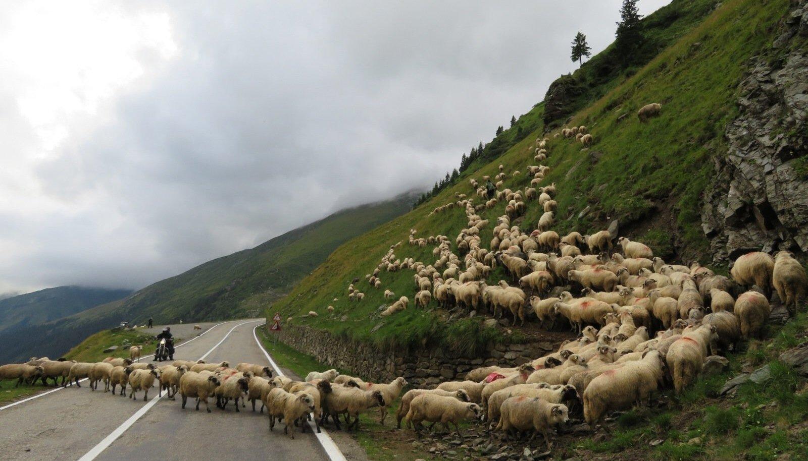 Teesulg motomatkal Rumeenias.
