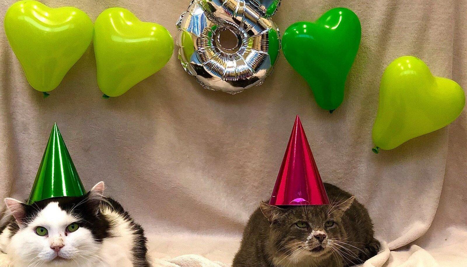 Pesaeidjas kodu ootavad kassid Felix ja Hallike