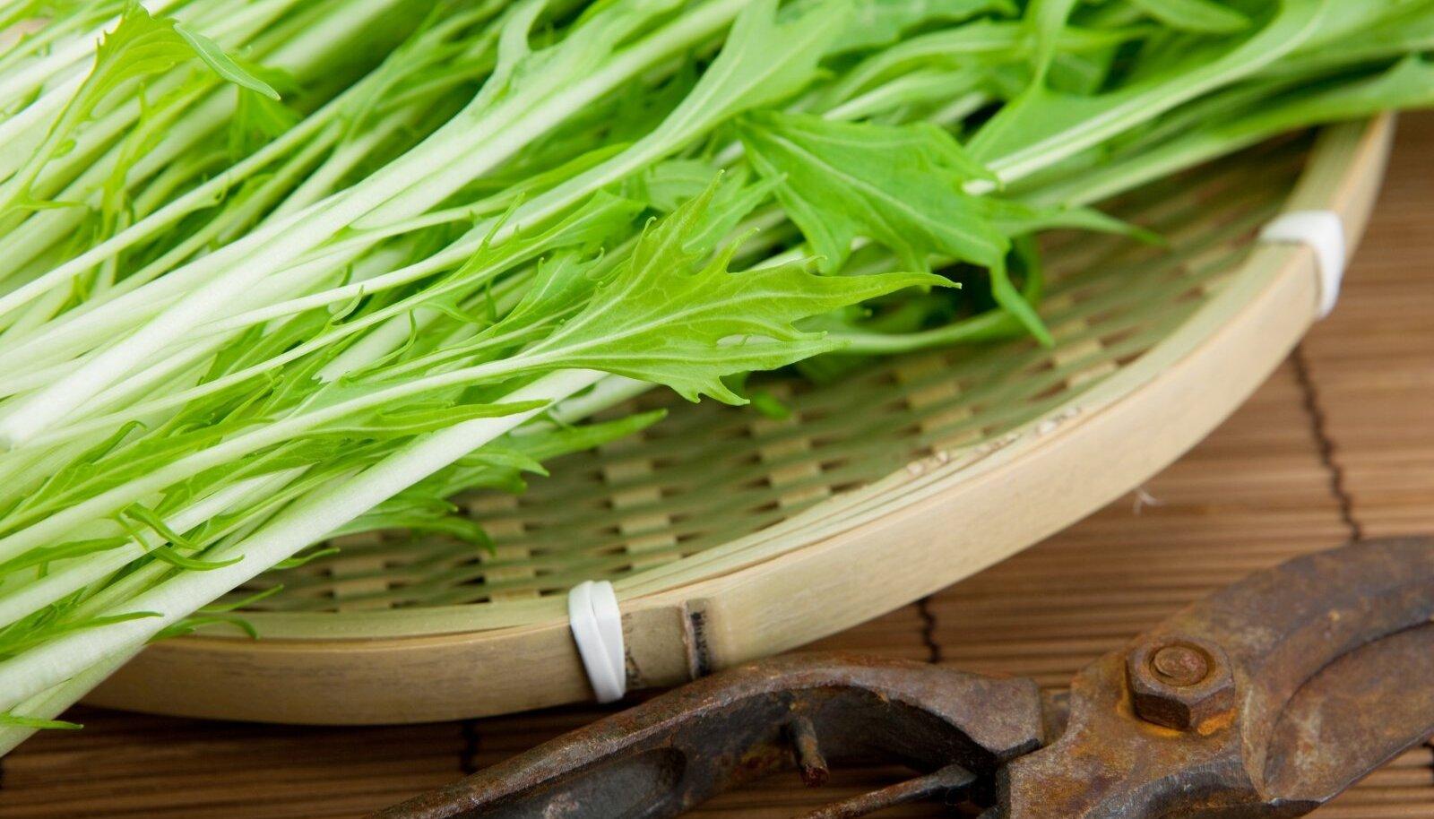 Värskelt koristatud jaapani lehtnaeris ehk misuuna.