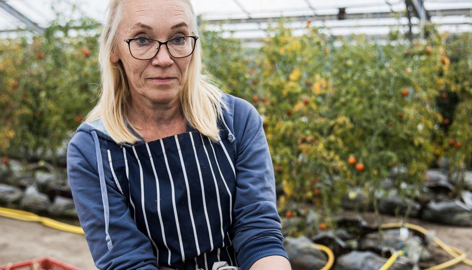 Agronoom Ave Leppik tegeleb ETKIs tomatiseemnete tootmisega.