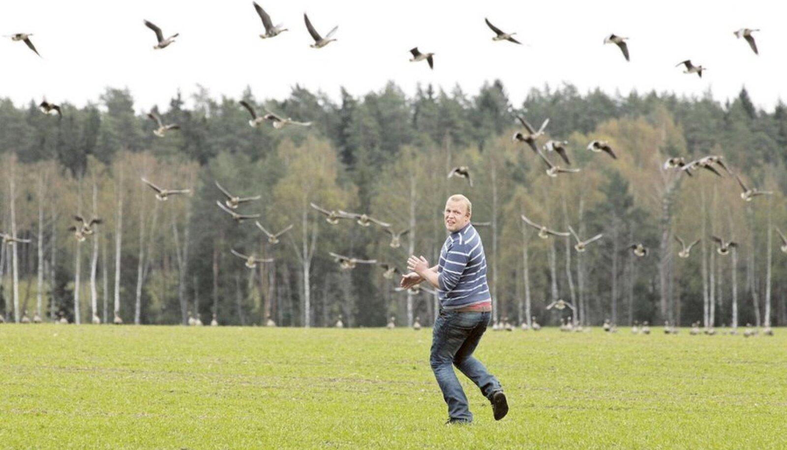 Tartumaa talumehe Juhan Ojamaa meelest võiksid haned oma söömaorgiaid pidada mujal kui tema põllul. Lindude minemaajamise teeks lihtsamaks õigus neid küttida.