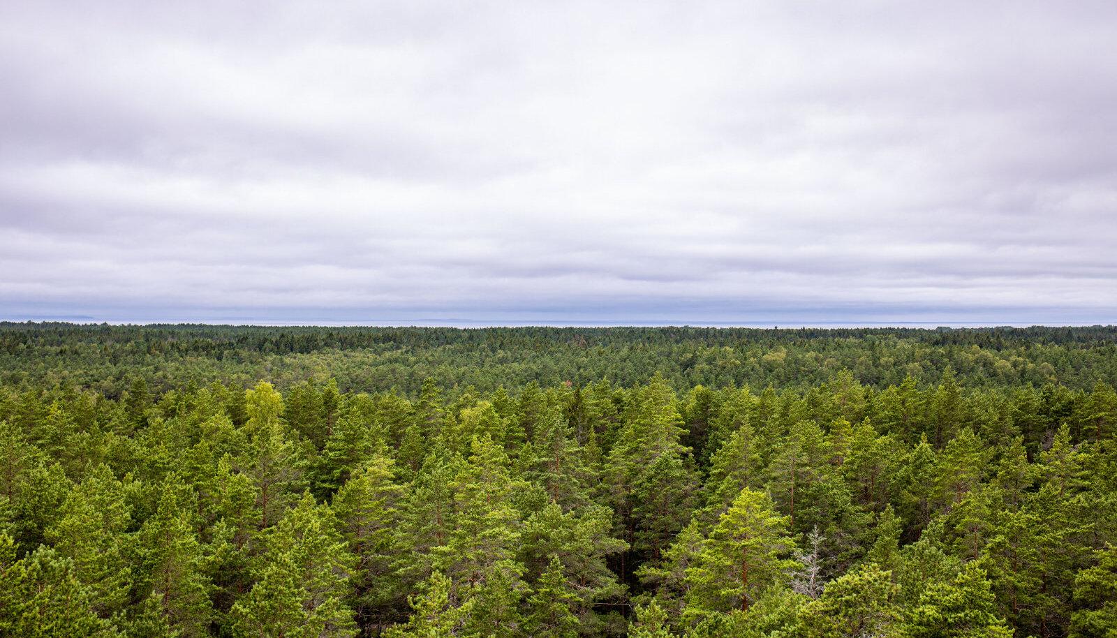 Absurd: omanik jäi ilma nii metsast kui rahast ning pidi oma metsast küttepuude saamiseks metsafirmale lausa 14 eurot tihumeetri eest peale maksma.