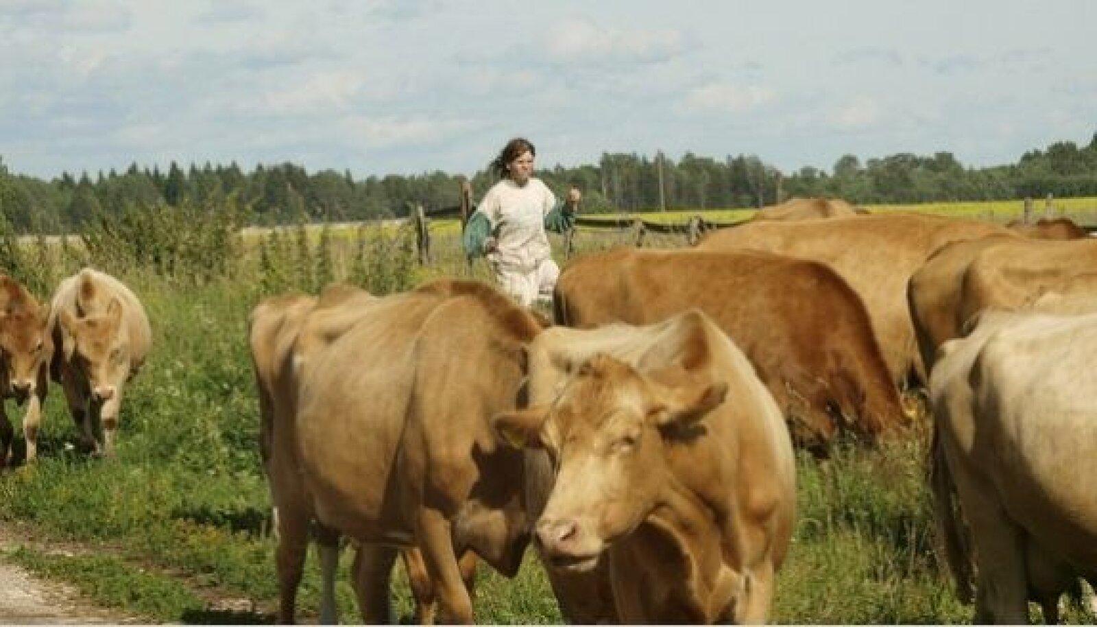 Kolm aastat Pahkla Camphillis elanud Merike – külas suheldakse omavahel         ainult eesnimedega – on asendamatu tööinimene lehmakarjas.  Kõik maakarja vissid on tema sõbrad.