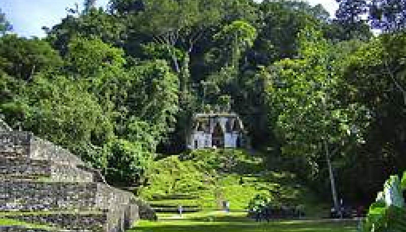 Varemed: Iidse maiade kultuuri jäljed puude all ja varjus. Sophie Dragunevitsh