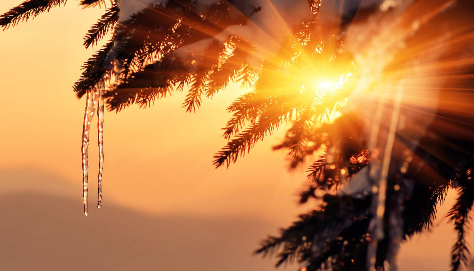 On talihari ehk kesktalvepäev, jõuluemapäev, tsiapäiv, sianäü pühä, tõnisepäev, tõniksepäev, tennüs- ja tinnüspää