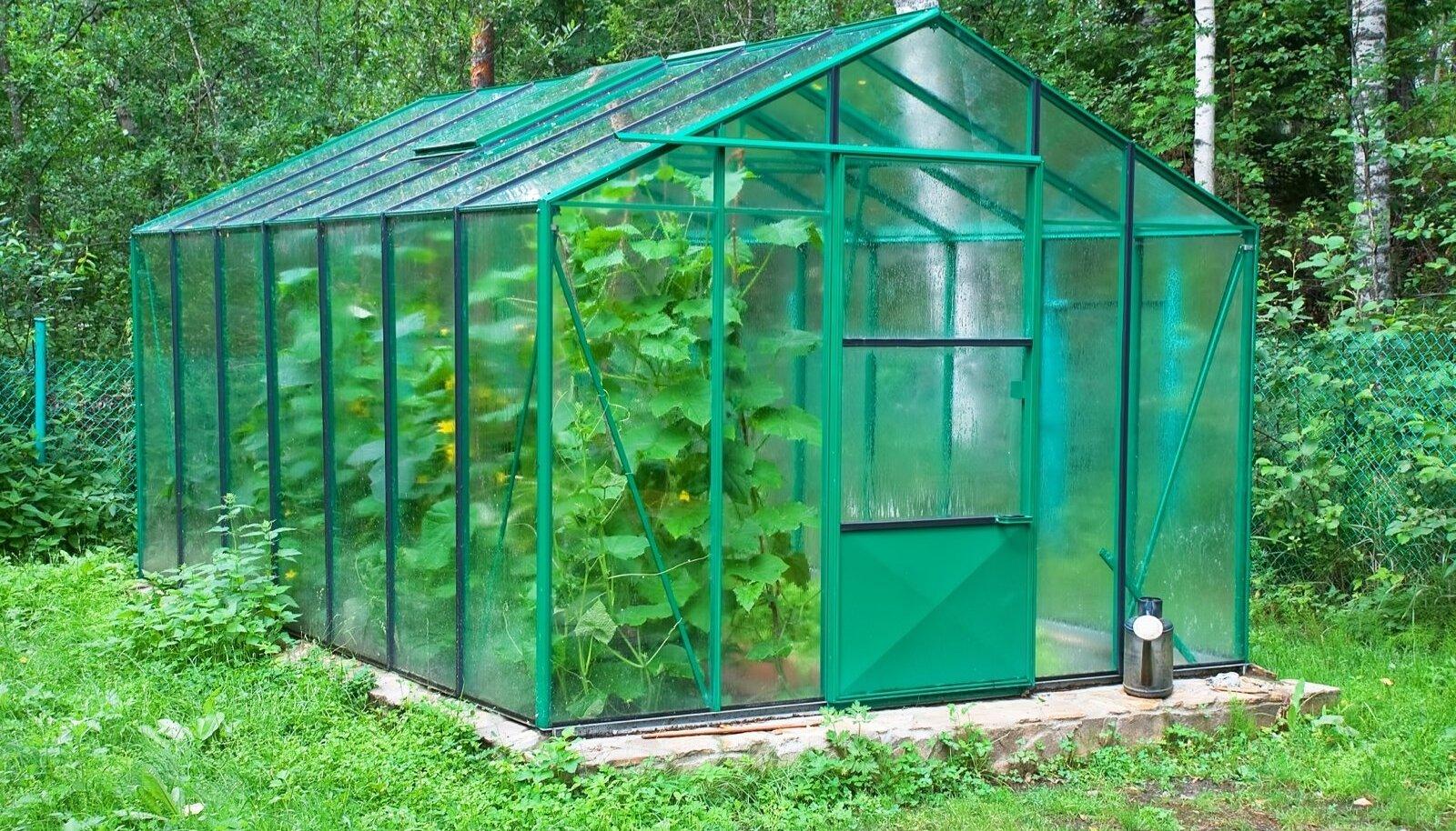 Kasvuhoone on meie kliimas lausa hädavajalik.