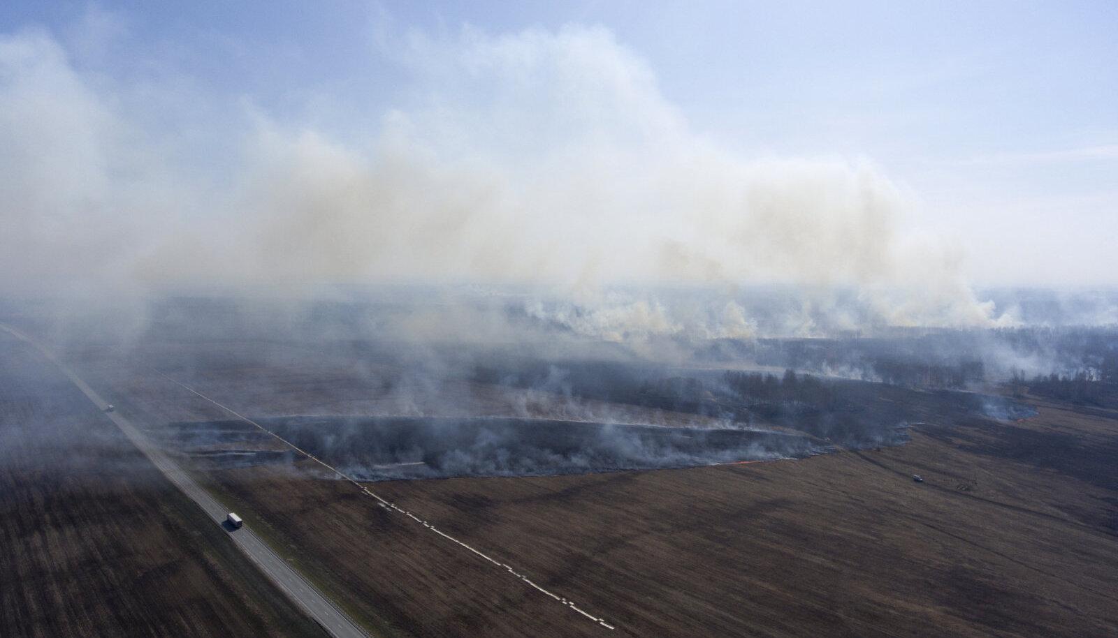 23. aprill 2020: rohi põleb Venemaal Novosibirski piirkonnas (Foto: Kirill Kukhmar / TASS, Scanpix)