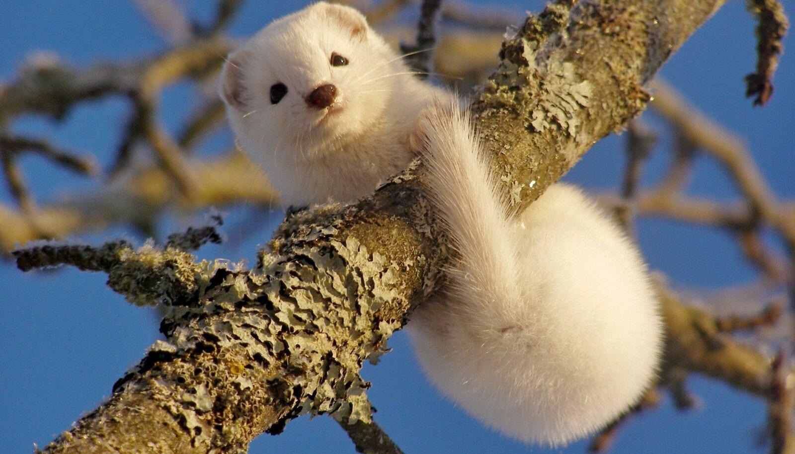 Nirk talvel vabas looduses