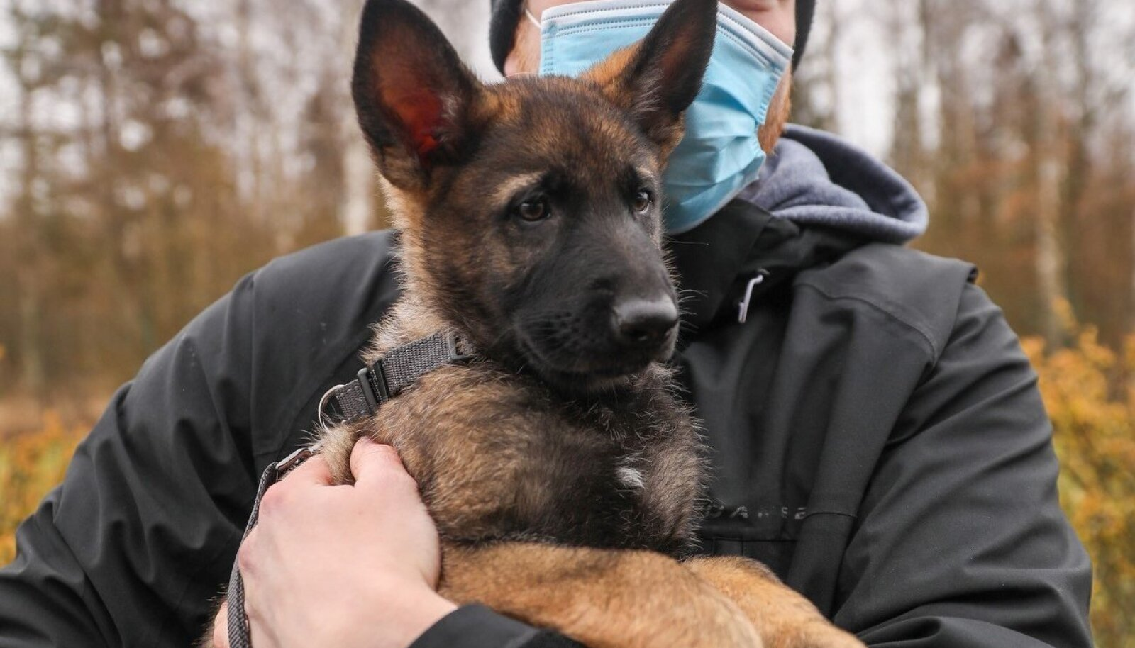 Politsei koerad2
