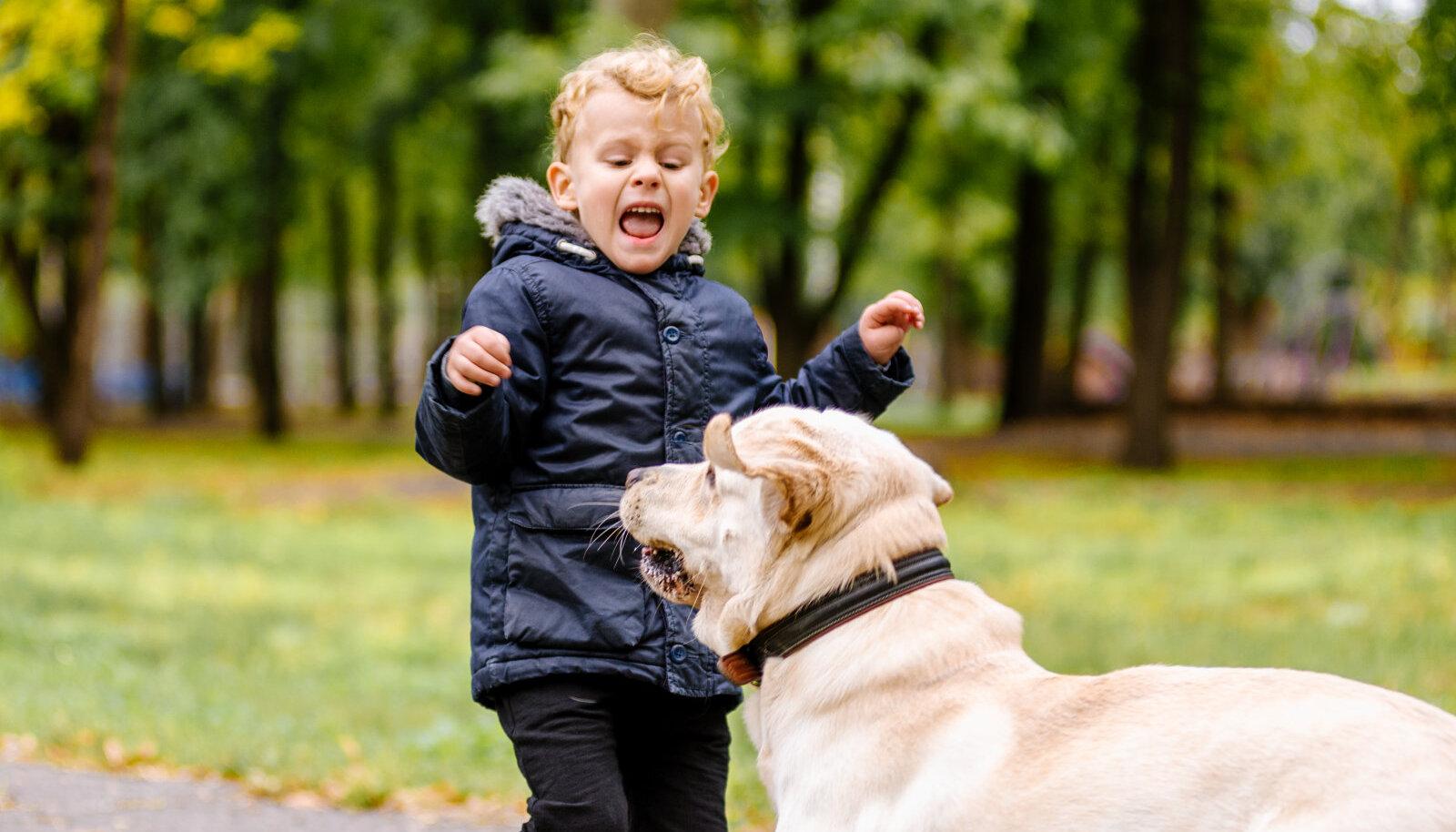 Laps kardab koera