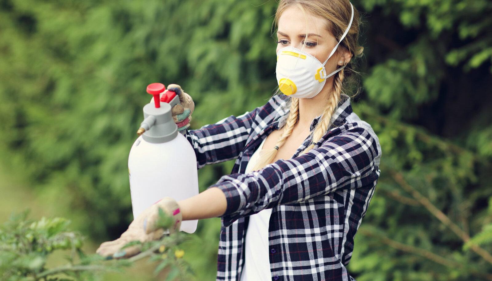 Viljapuude pritsimisel tuleb kanda maski