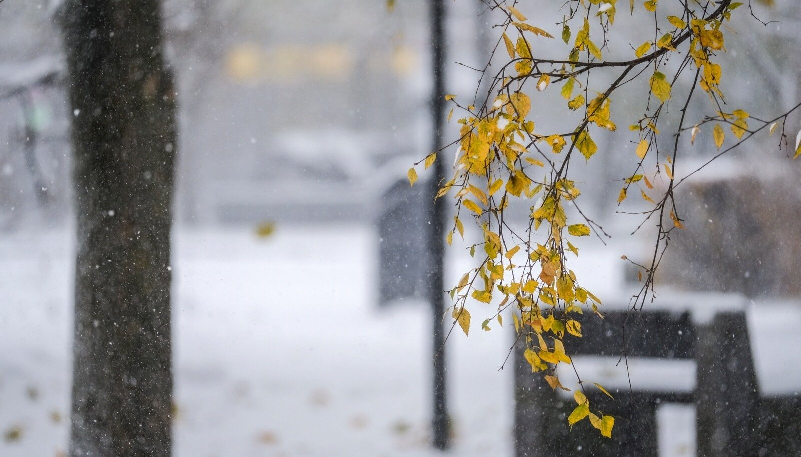 Esimene lumi võib Ida-Eestisse saabuda juba neljapäeval. Lumekruupe võib aga mujal eestis näha juba homsest.
