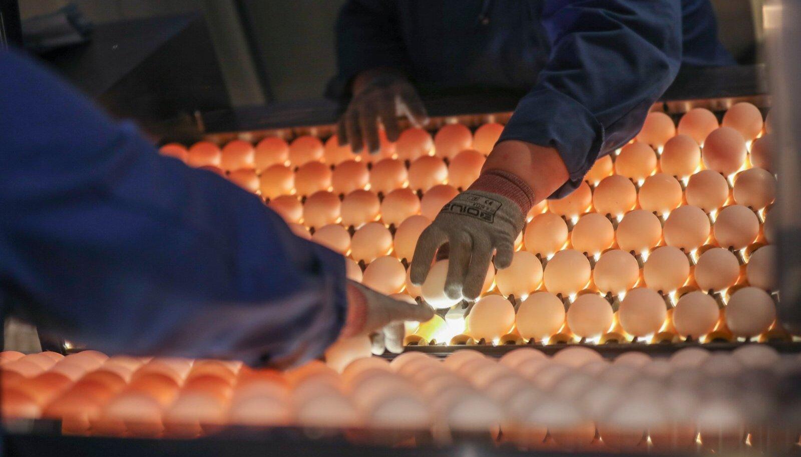 Eggo munade tootja DAVA Foods Estonia. Vladimir Sapožnin