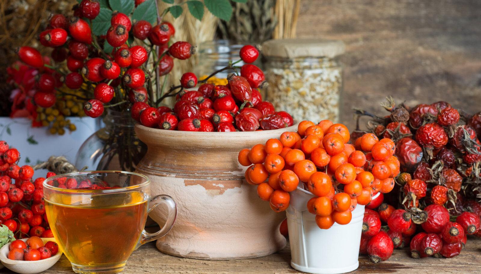 Sügis pakub väge täis marju, mis tugevdavad immuunsüsteemi