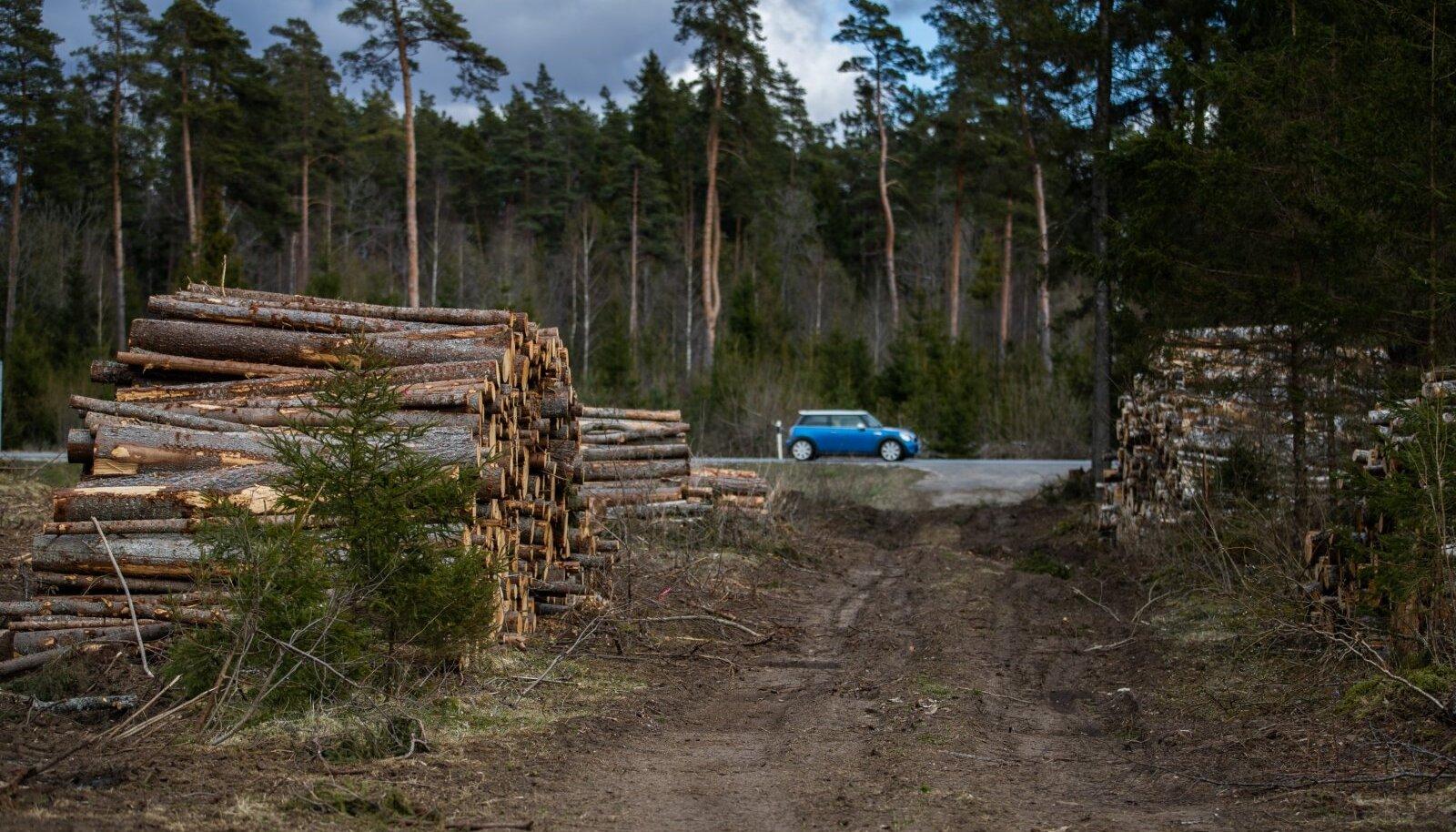 Keskkonnaühendused ütlevad, et vajaduse korral võiks põletada puidutööstuse jääke või puidulisi jäätmeid. Sirgest ümarpalgist oskab eestlane ka kõrget lisandväärtust pakkuvat mööblit või maja meisterdada.