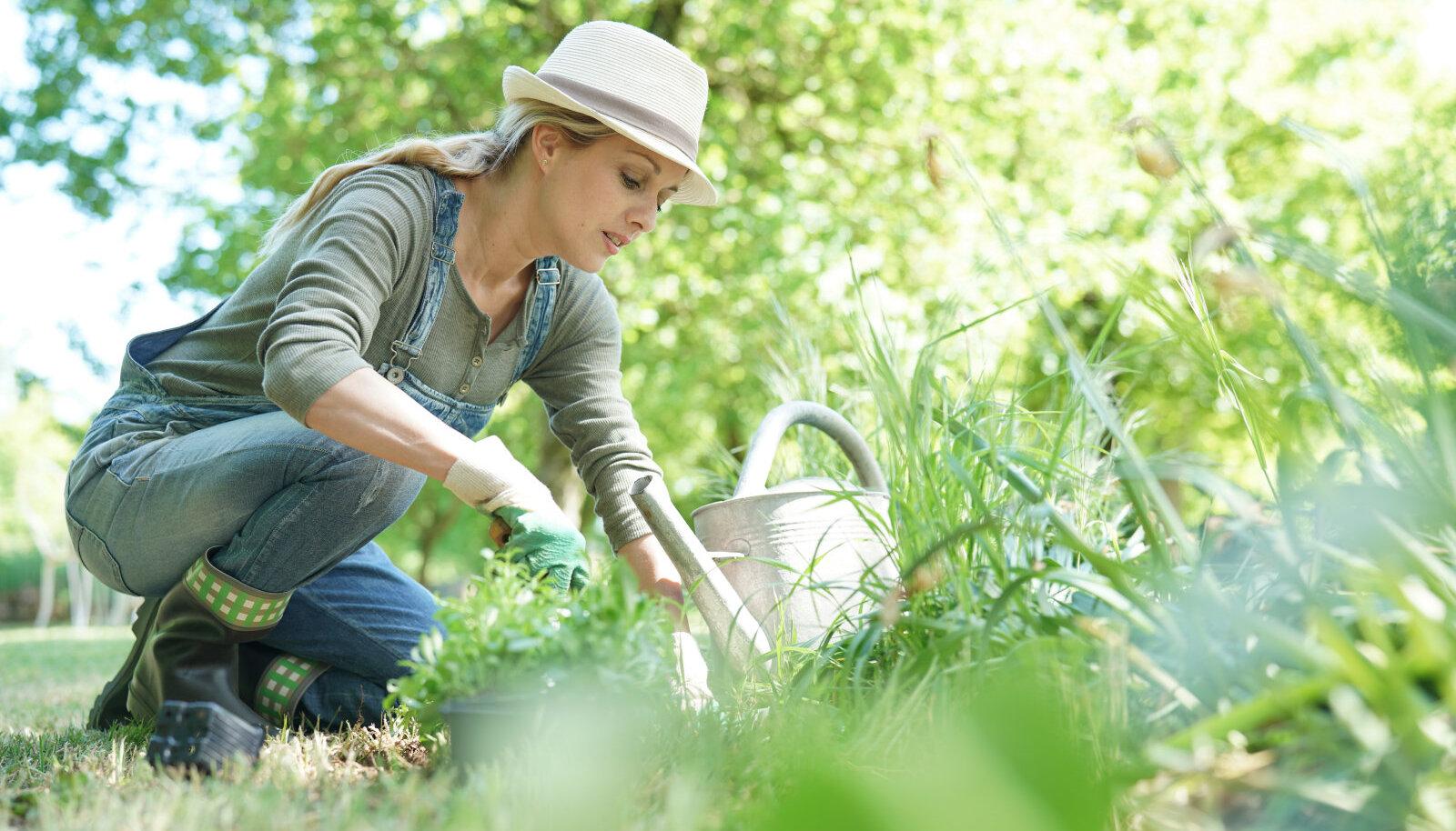 Ostmisel tuleb veenduda, kas taimel on sordile omased tunnused
