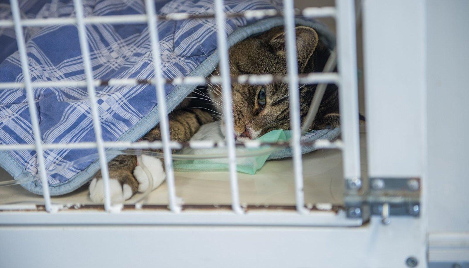 Kass loomakliinikus