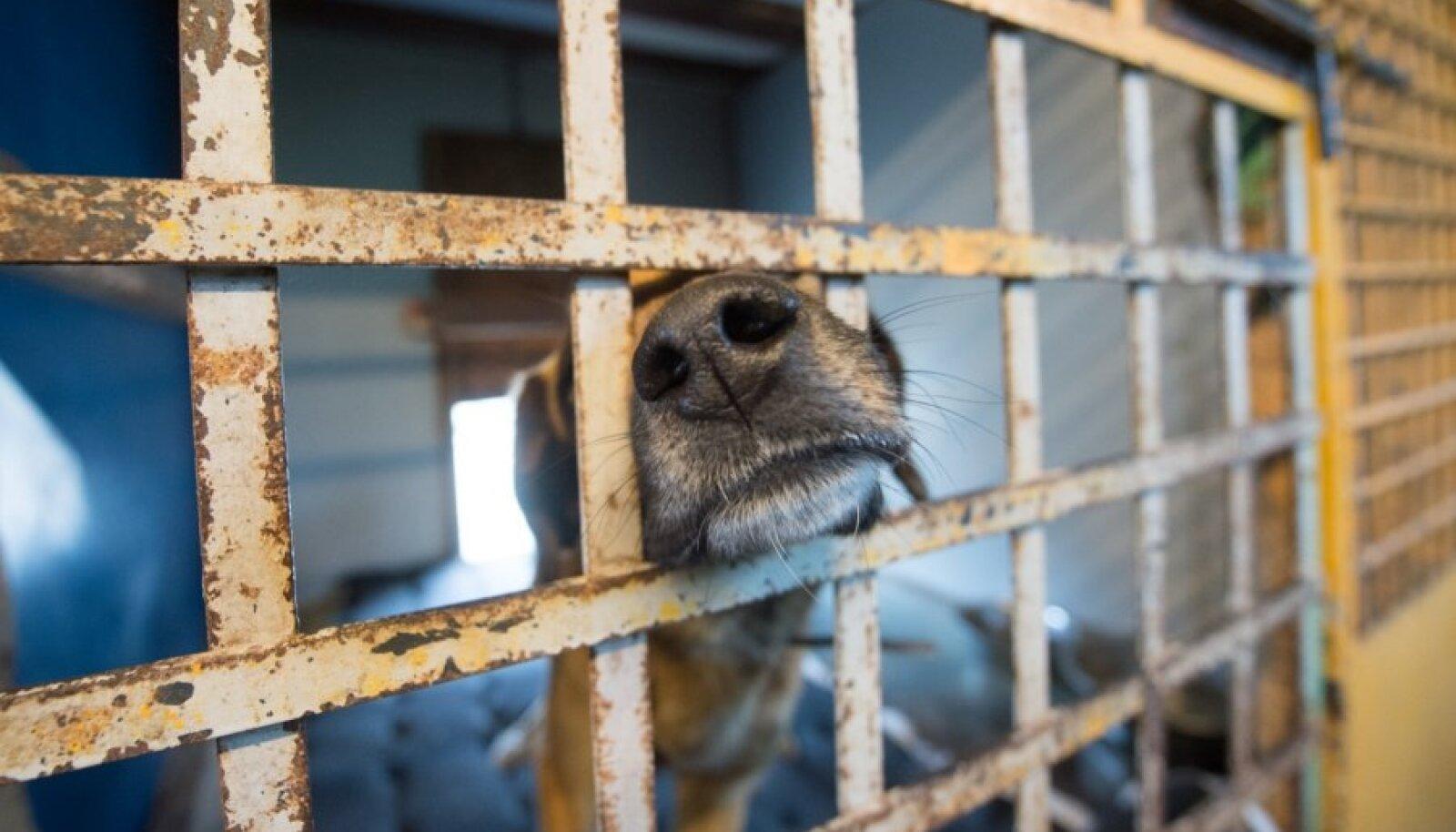 Pärnu loomade varjupaik