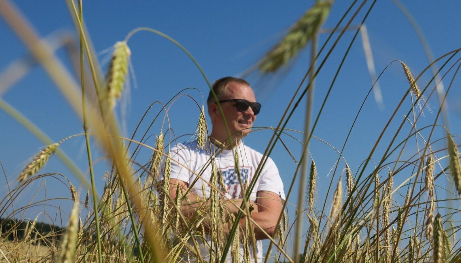 Mahepõlde on viljelusvõistlusel viis. Järvamaal tegutsev mahetootja ja -töötleja Märtin Rõõmussaar võistleb esmakordselt ja 'Sangaste' rukkiga.