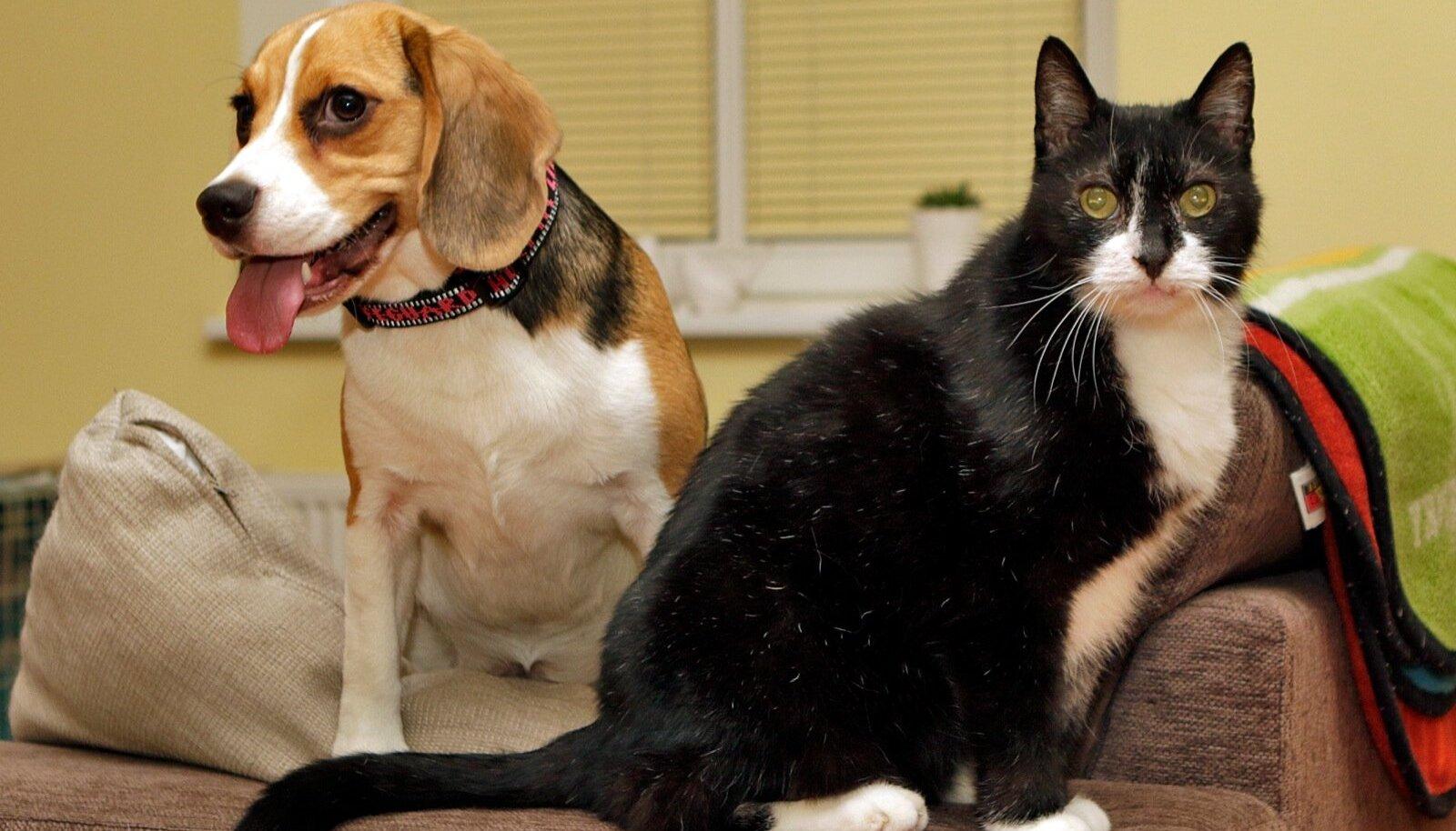 Koer ja kass
