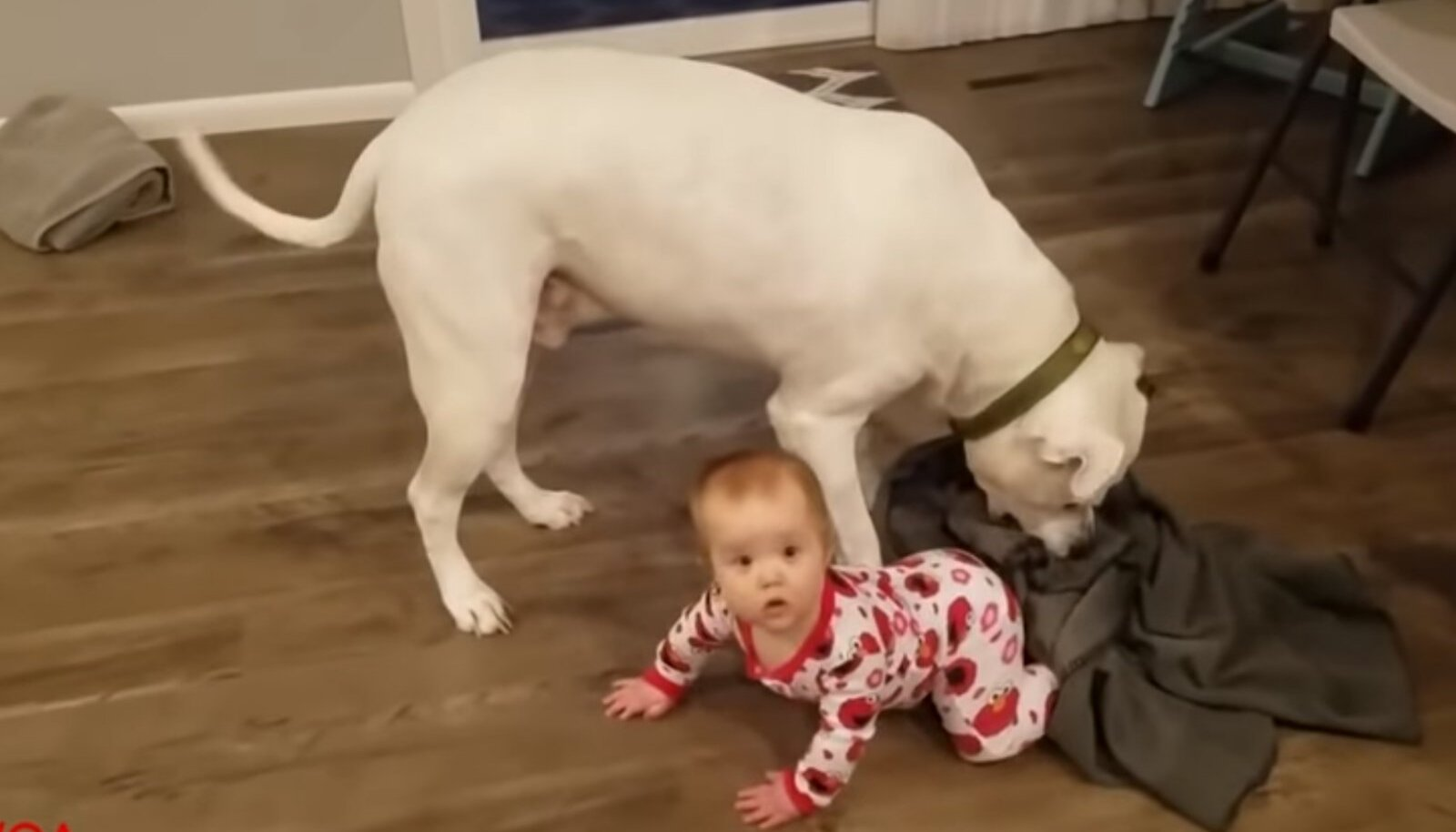 Koer-lapsehoidja