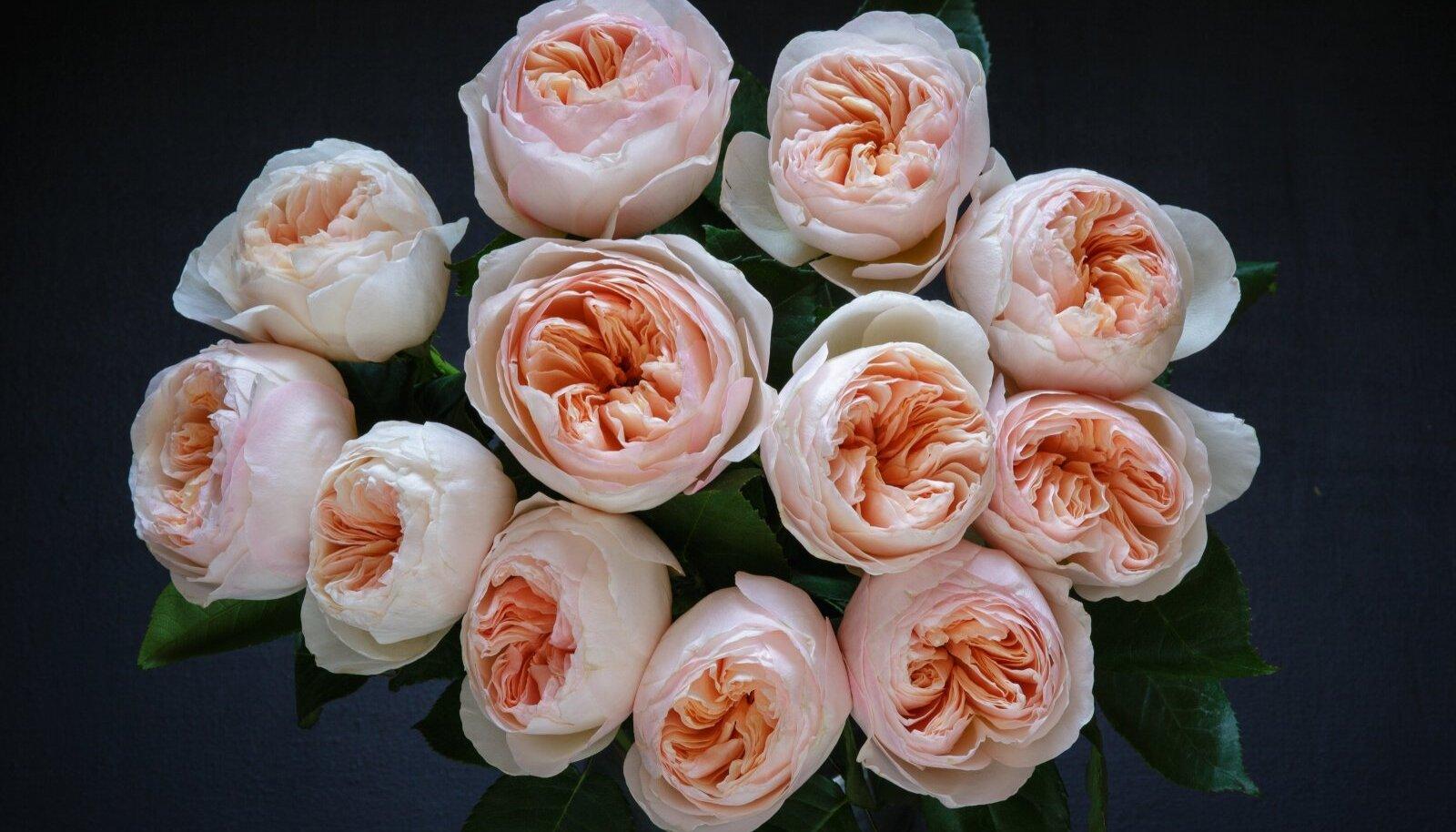 Roos Juliet