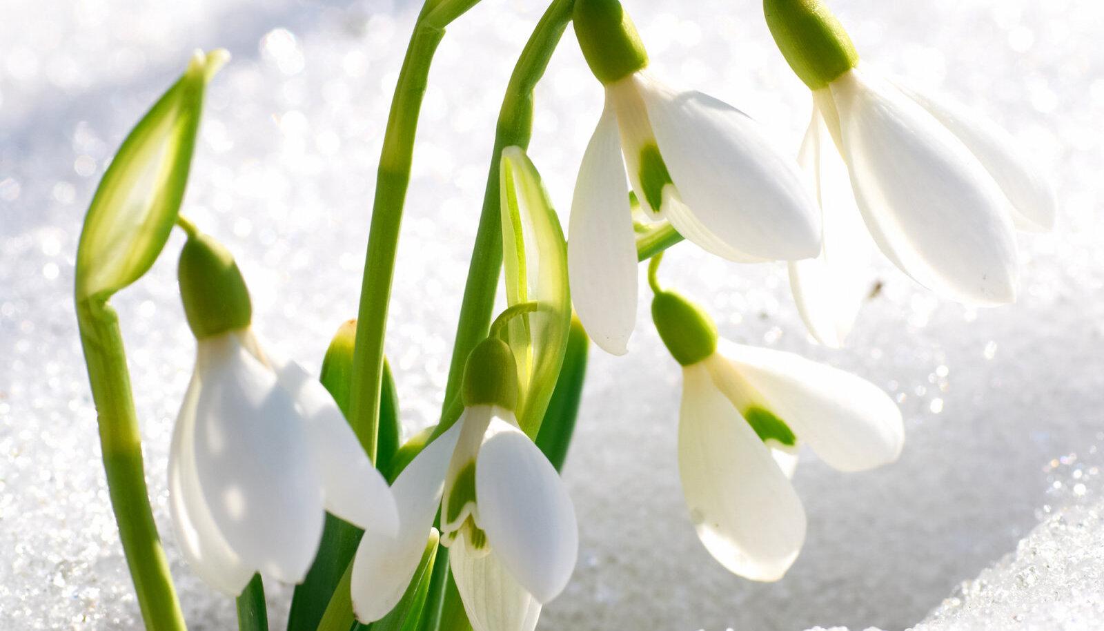 Õhus on kevadet - käes on urbekuu