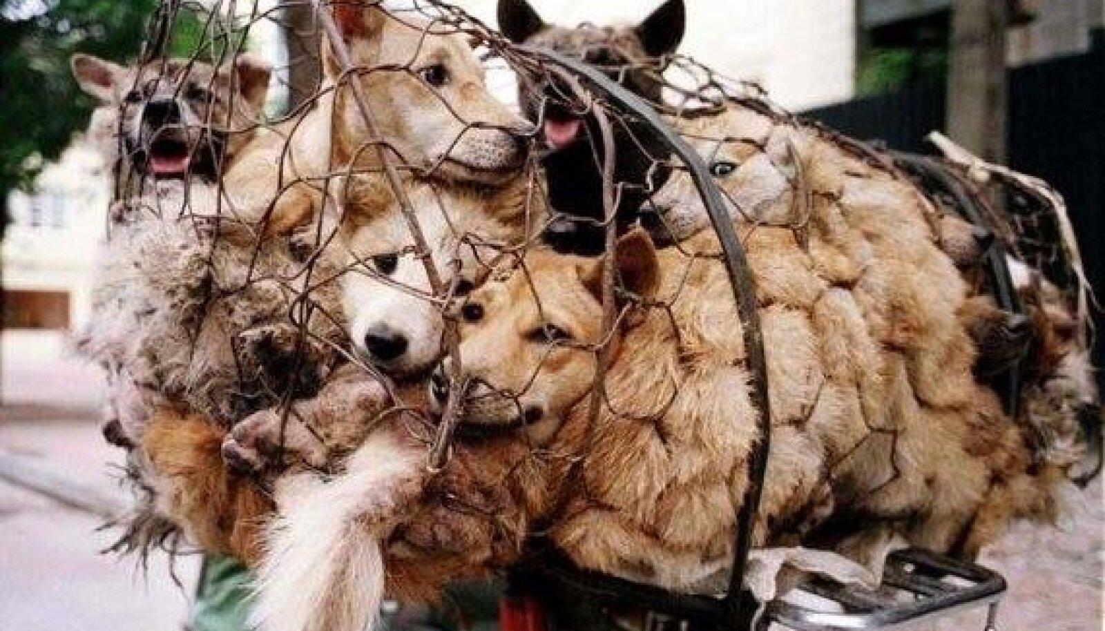 Söömiseks mõeldud koerad turul