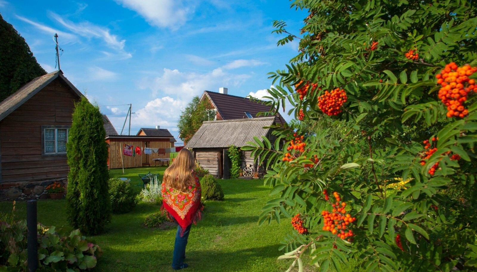 """Pildil punav pihlakas on praegugi marju täis. Üks erinevus oleks praegusel ja toonasel fotol siiski: """"Varsti pärast pildistamist sai puukuur rõõmsad Torma kihelkonna seeliku värvi triibud,"""" ütleb Tiina."""