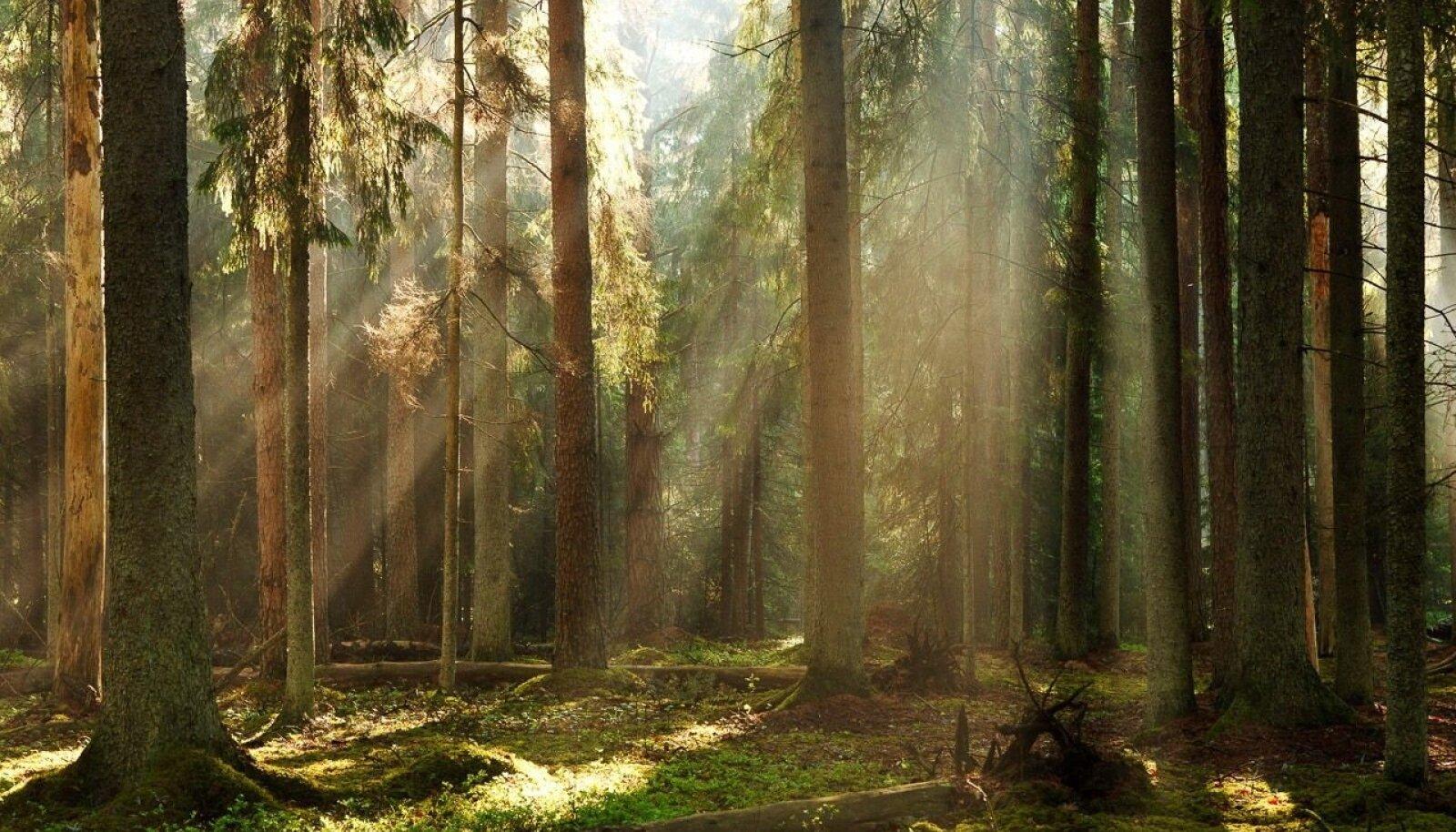Võrratu kevadhommik linnulaulust kajavas metsas, kus meeleolu loovad kõrged iidsed puud, nende vahel vaikselt voogav udu ning päikesekiired, mis puude ja udu vahelt maapinnale teed otsivad. Sellist müstilist vaadet pakub külastajatele Valgesoo maastikukaitseala Põlvamaal.