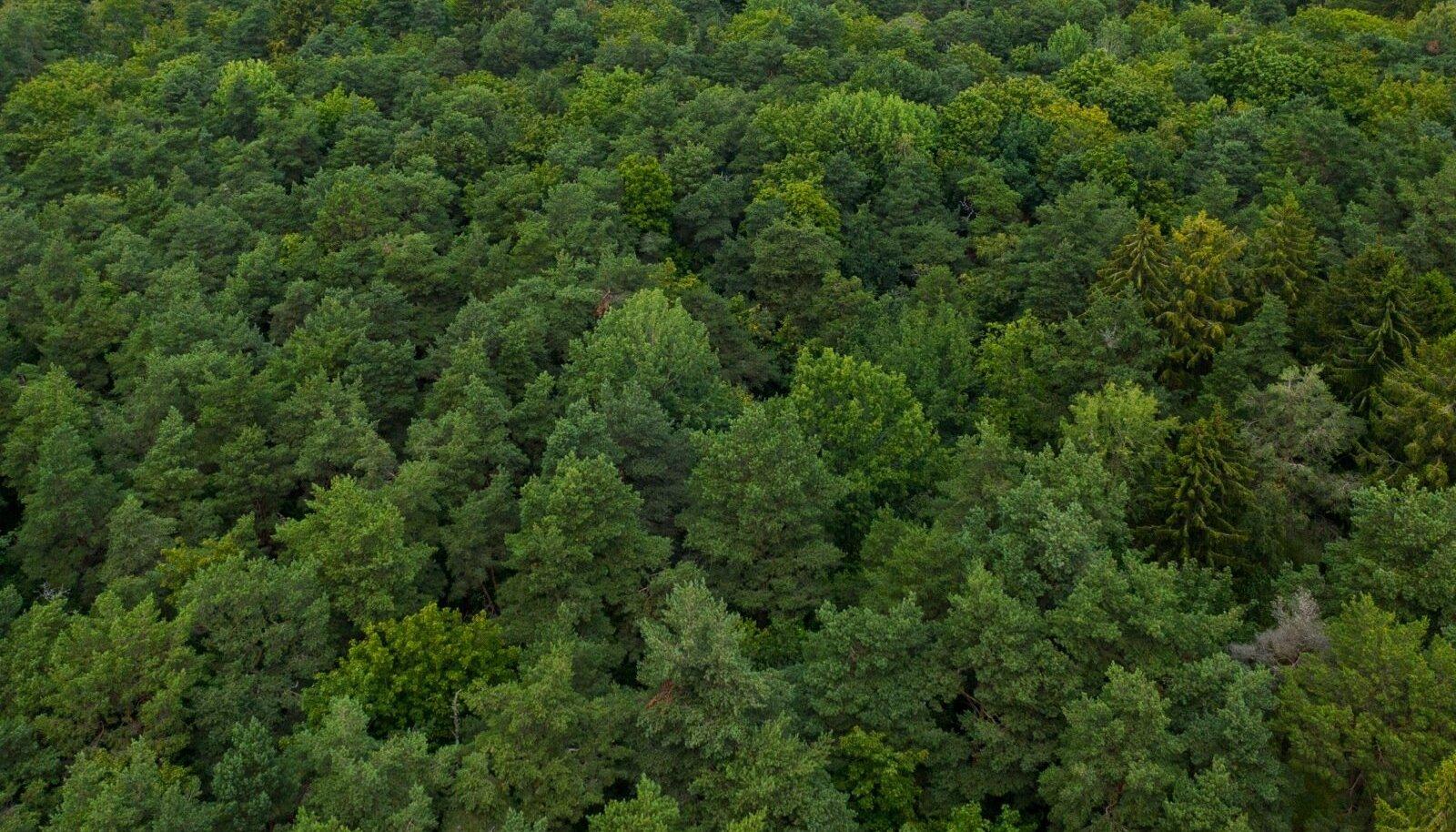 Võrreldes kümnendite eest tehtud kasvukäigutabeleid praeguste kasvukäikudega, on näha, et puud kasvavad kiiremini.