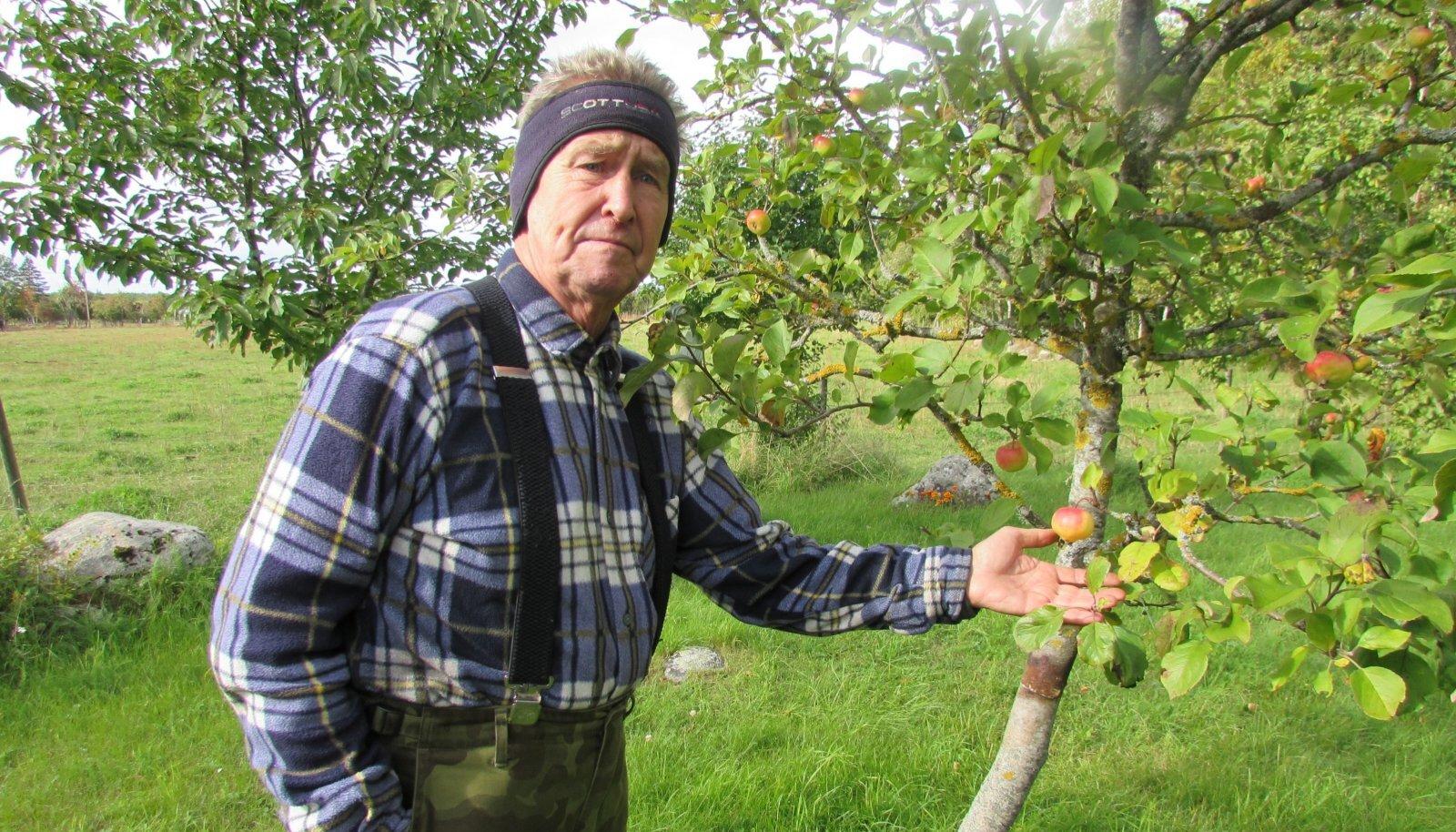 ARETAB Lauri on erinevaid õunasorte kokku pookinud.