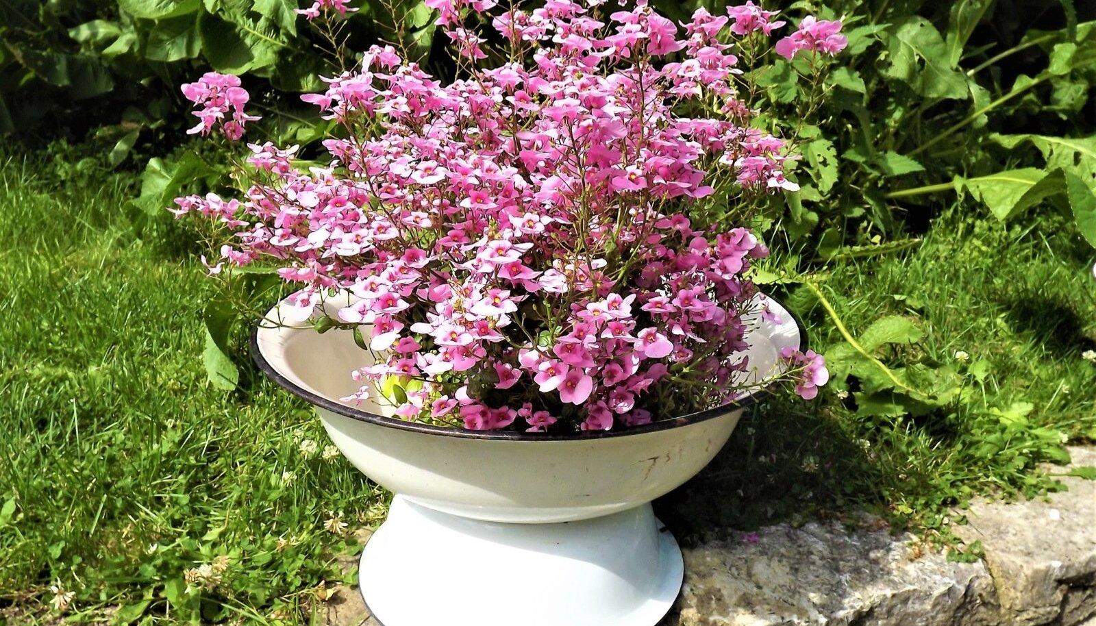 Lillede aluseks on kaks vana pesukaussi.