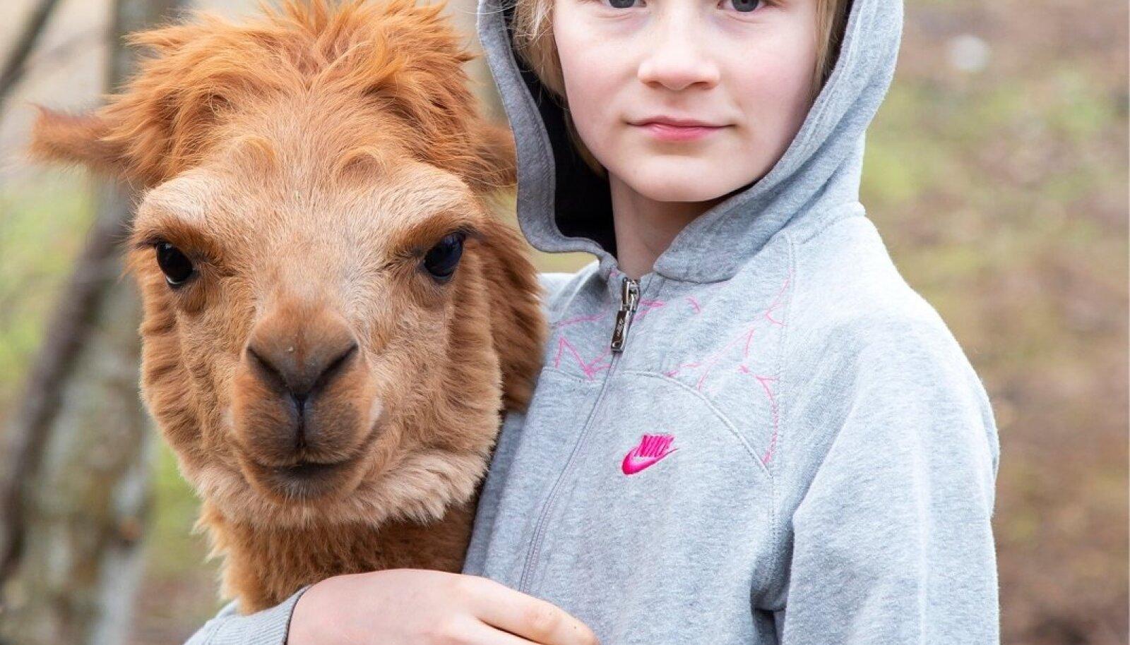 Osa alpakasid on Sarve talust ka laiali läinud. Kuigi Margus tunnistab, et raske on müüa looma, kes on sinuga elanud ja kasvanud. Pildil Nelli ja Laurits.