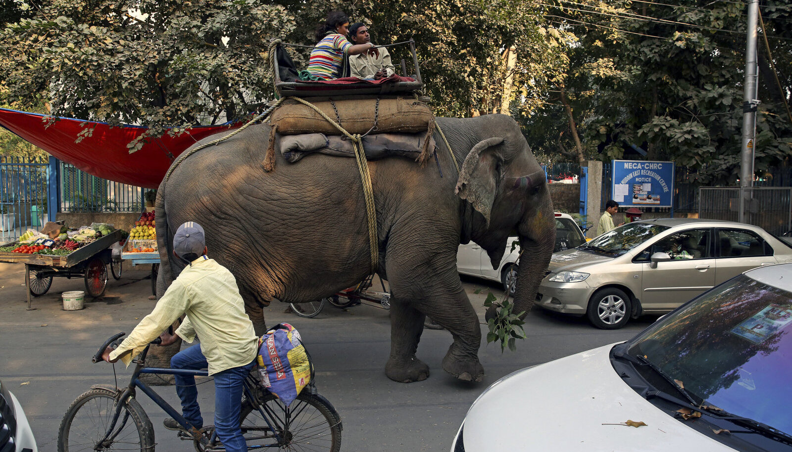 Elevant jalutamas India pealinna New Delhi tänavatel