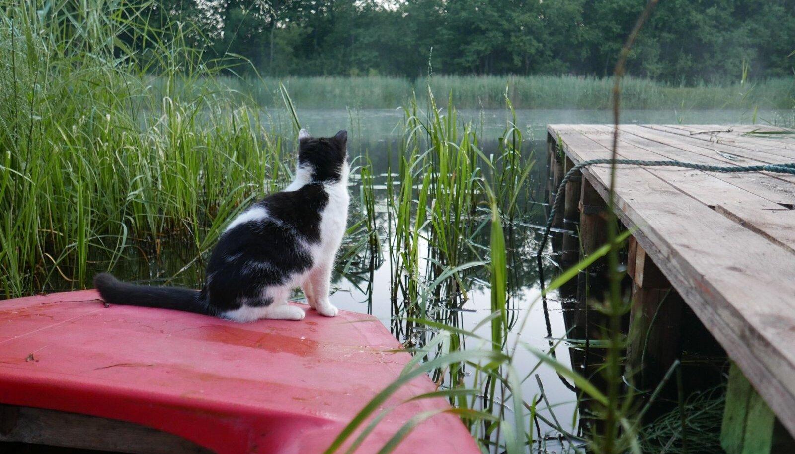 Kui jõgi on aia pikendus ja ilusaid vaateid saab nautida rohimata ning koos kassiga.