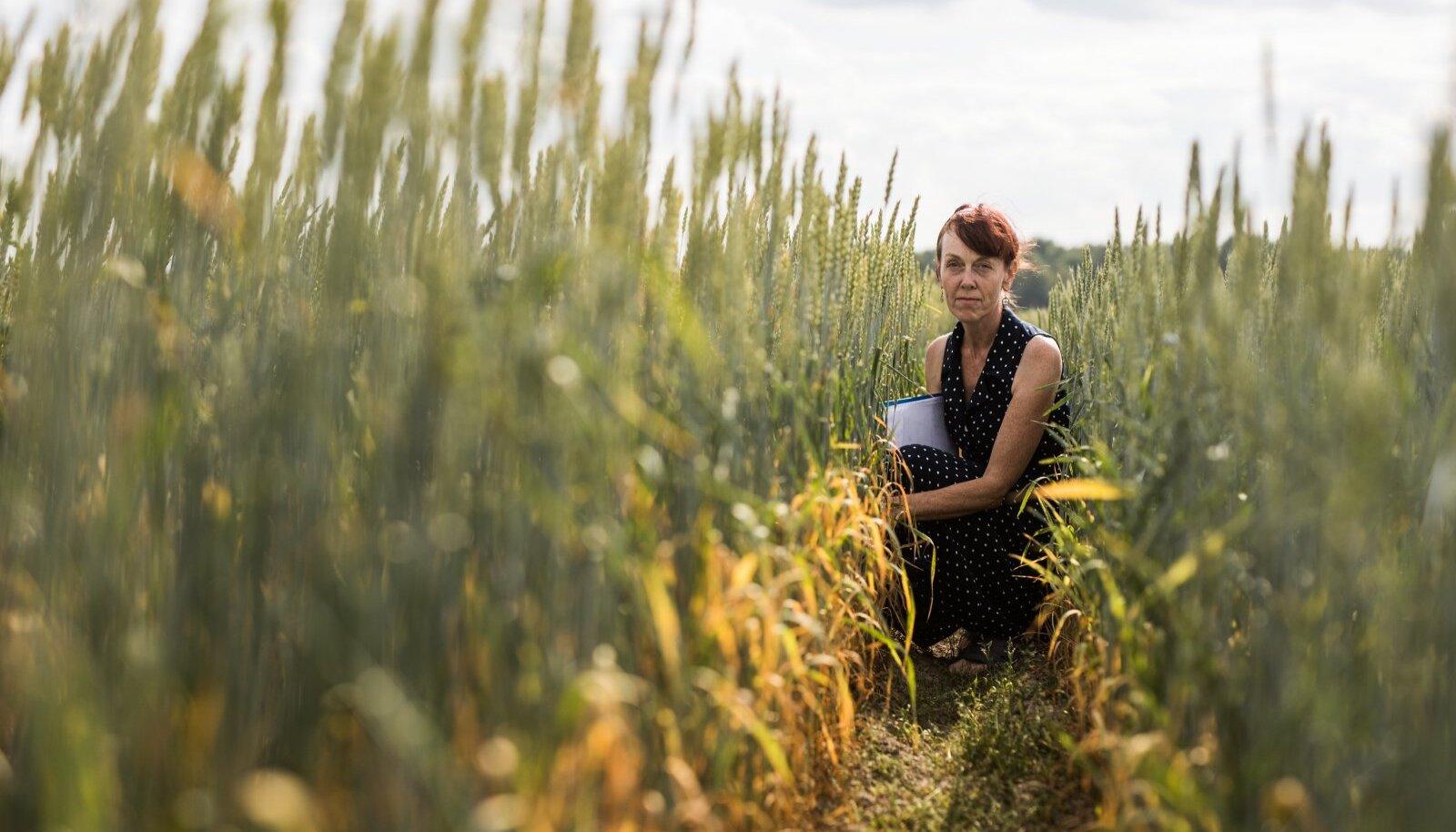 Artikli autor, nisuaretaja Reine Koppel tunneb nisu hingeelu läbi ja lõhki.
