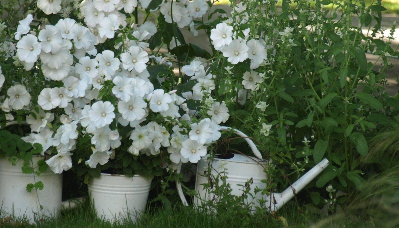 """Ühevärviline aed """"Unenägu""""."""