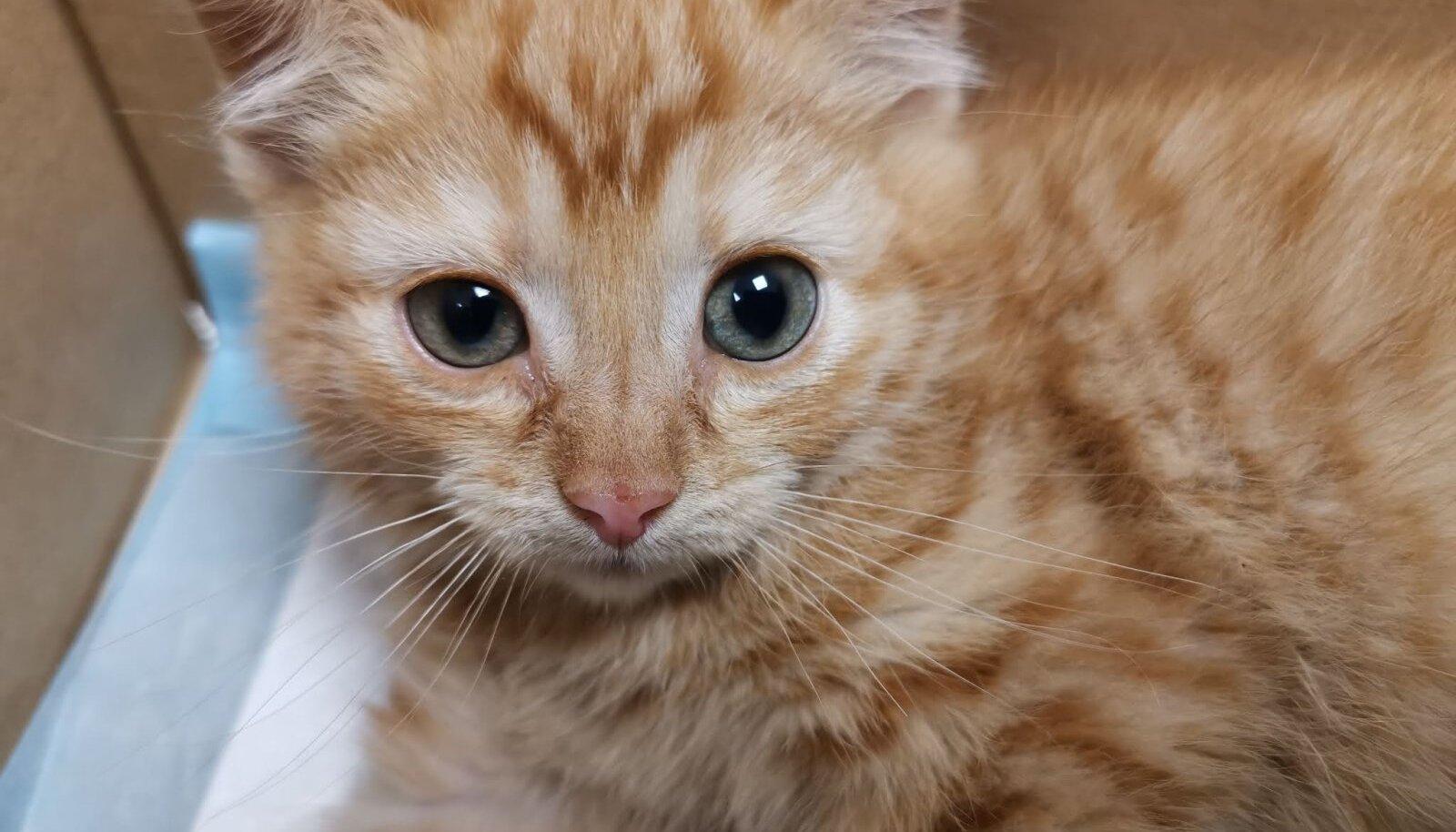 Õnneks osutus algselt surnuks peetud kassipoeg peaaegu terveks