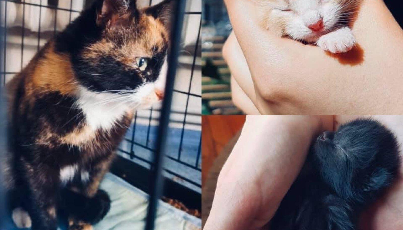 Kass Kadri ja pojad
